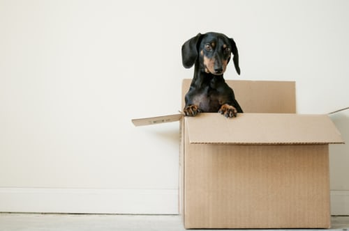 moving box with dog